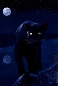 pantera-negra-y-la-luna